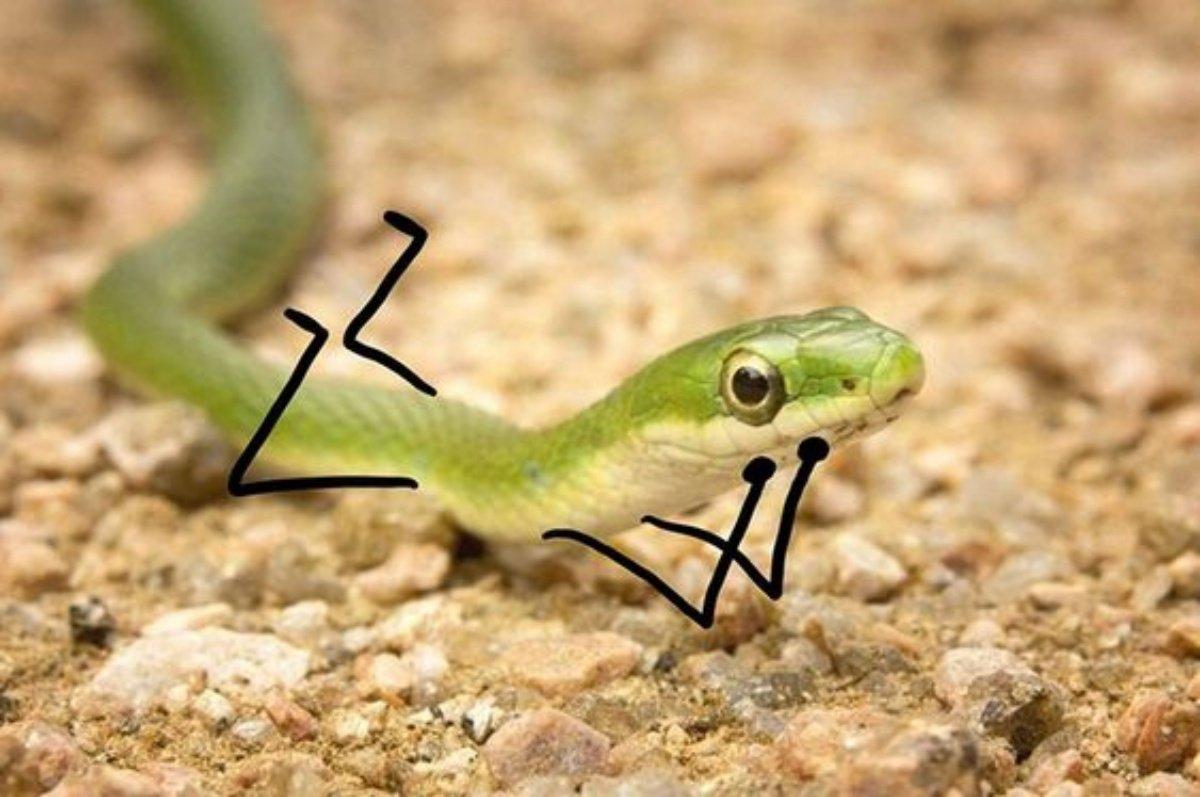 Snake 2 1
