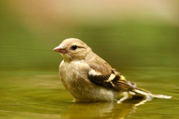 Closeup Shot Cute Sparrow Bird 181624 14002