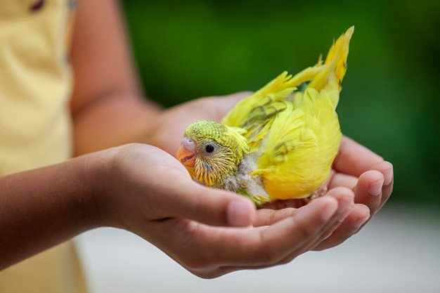 Cute Little Budgie Bird Child Hand Asian Child Girl Play With Her Pet Bird With Gentle 7186 2851