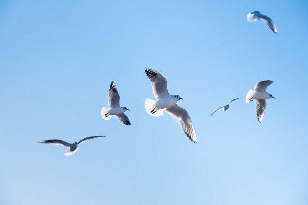 Seagulls Birds Fly Blue Sky 127675 2484