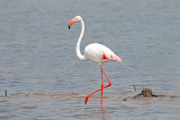 Flamingo Phoenicopteridae Beautiful Birds Pond 35071 540