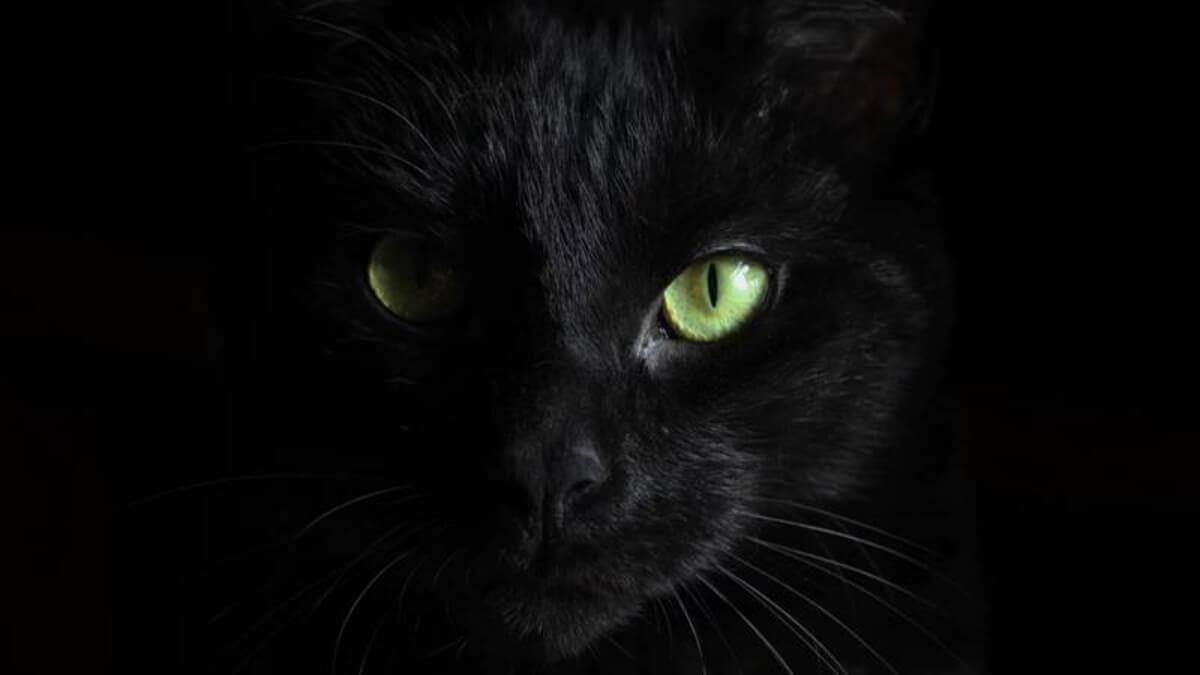 ความเชื่อ แมวดำ