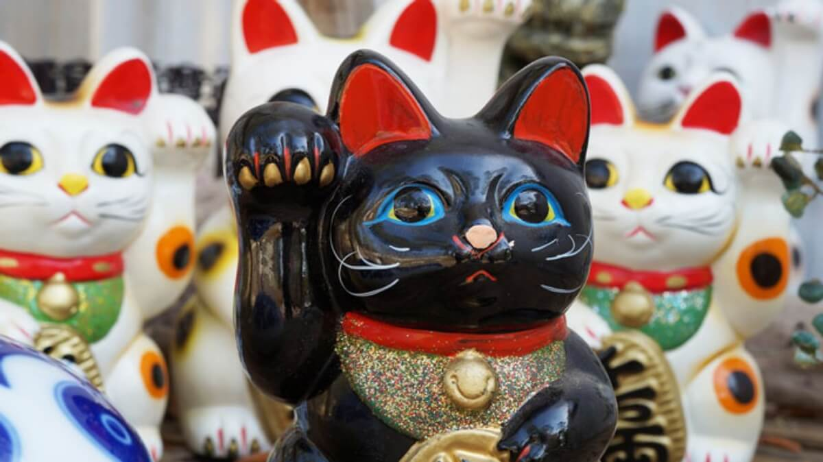 แมวนางกวักสีดำ