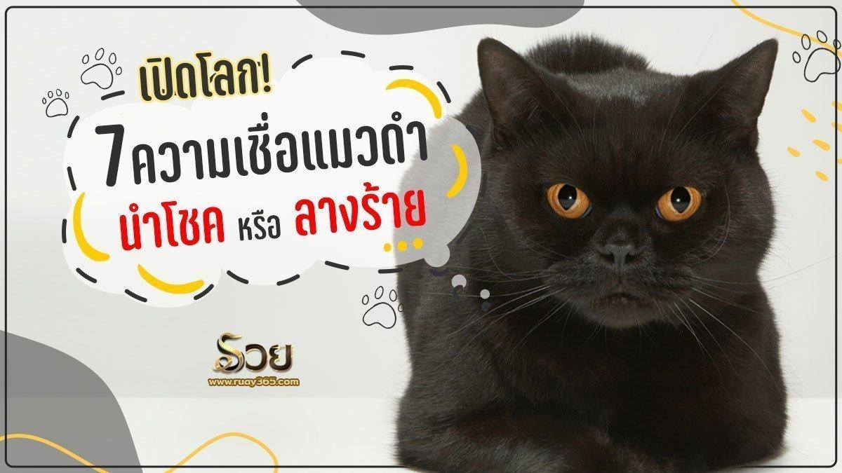 ความเชื่อแมวดำ