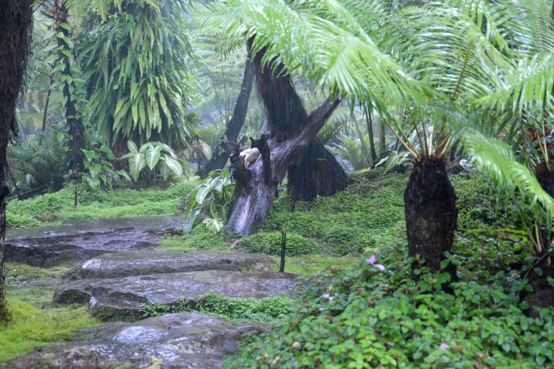วัดถ้ำผาแด่น สวนป่าผาแด่น