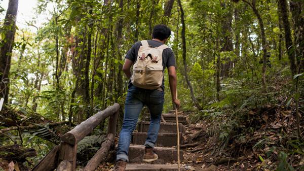 ฝันว่าไปเที่ยวป่า