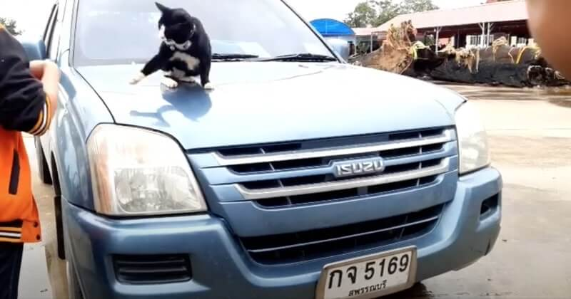 เจ้าโทนนอนอยู่บนรถ แมวให้โชค