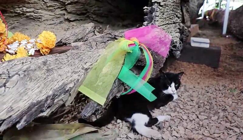 เจ้าโทนแมวตะเคียน