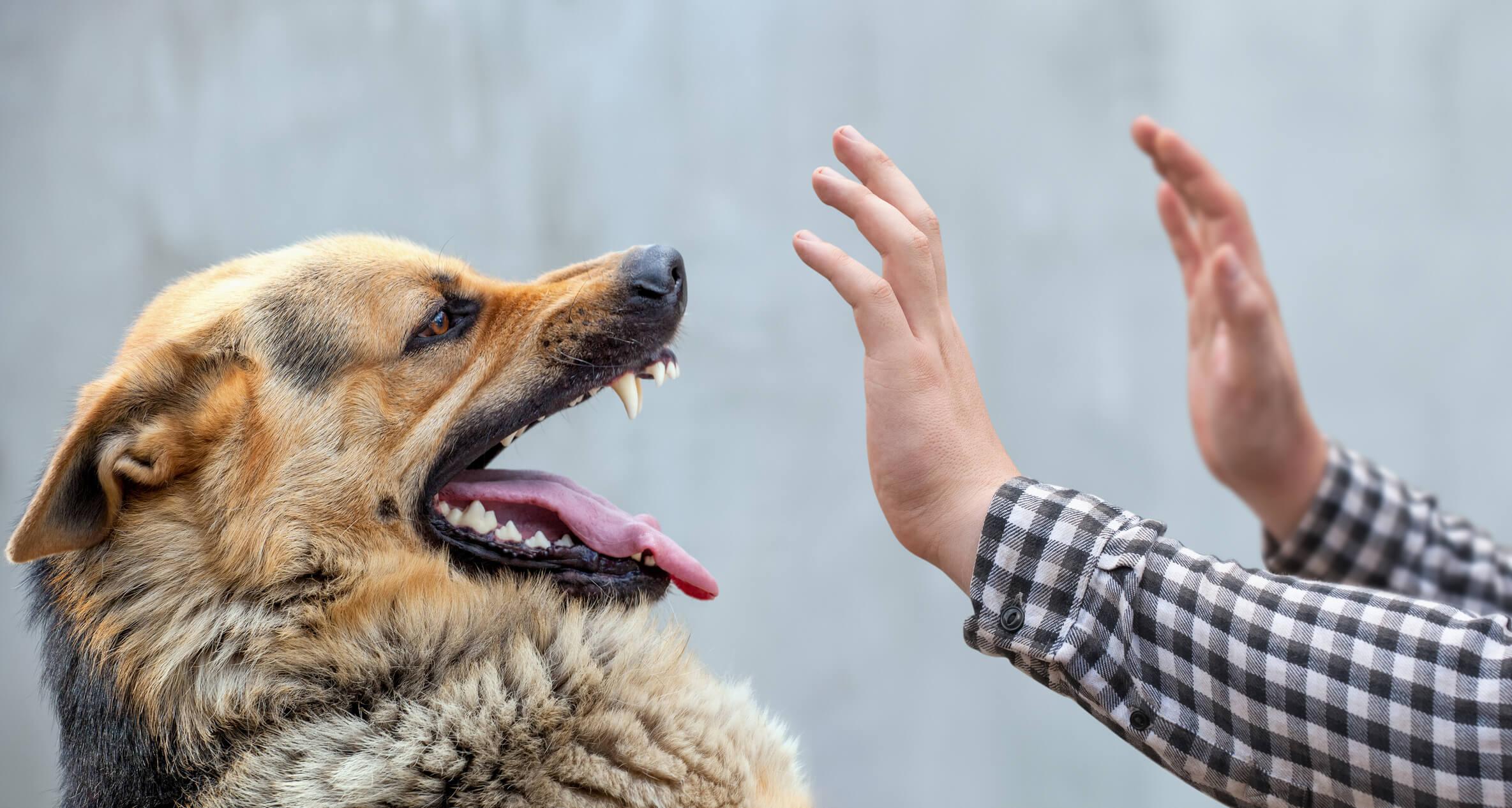 หมาไล่กัด ควรทำอย่างไร