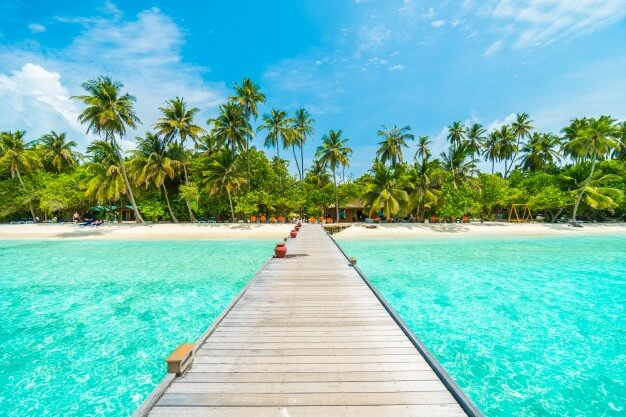 Landscape tropical vacation palm summer