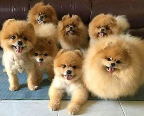 ฝันเห็นสุนัขหลายตัว ฝันเห็นหมา
