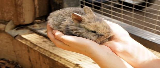 จับ กระต่าย