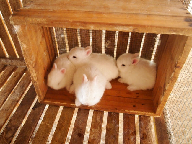 ลูก กระต่าย หลาย ตัว