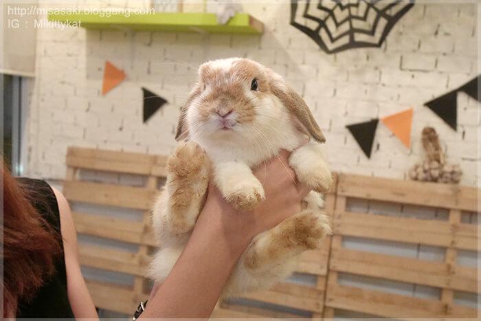 อุ้ม กระต่าย