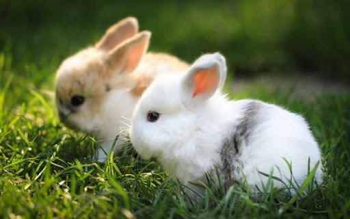 กระต่าย 2 ตัว