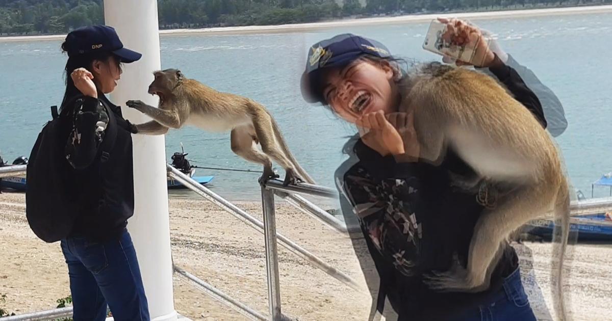 ลิงกระโดดกัดคน