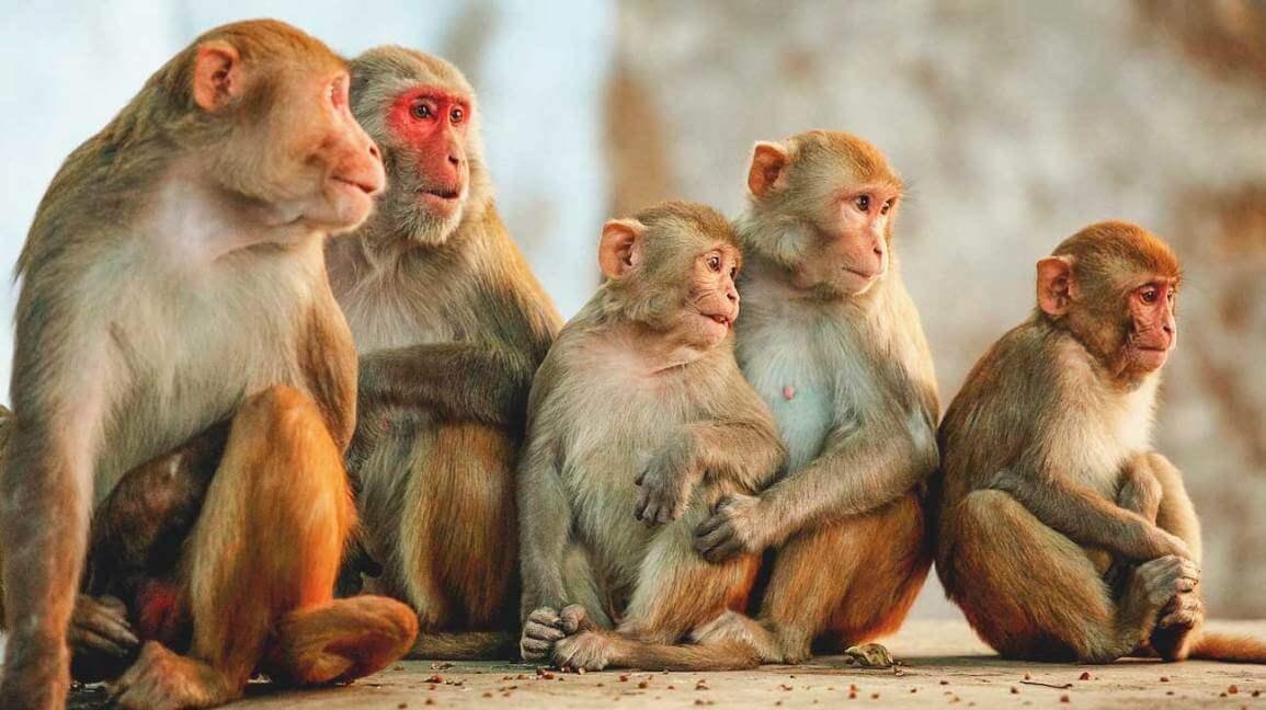 กลุ่มลิง