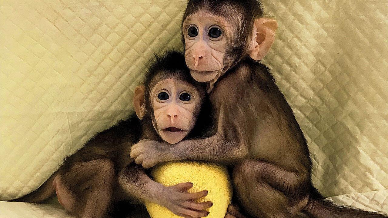 ลูกลิงน่ารัก