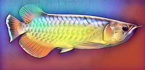 หน้าตาปลามังกร