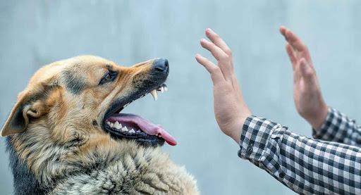 ยกมือกันหมา