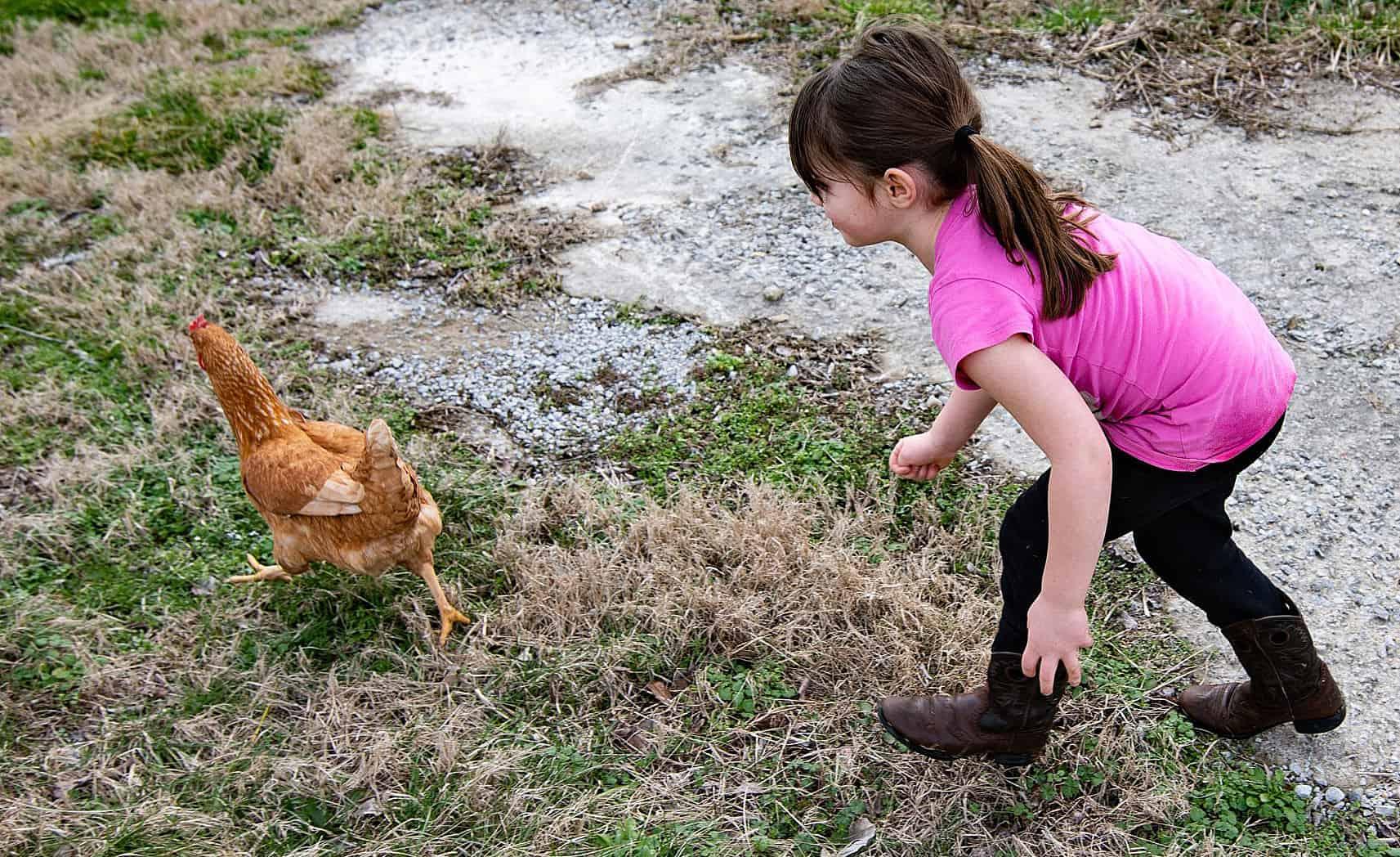 เด็กไล่จับไก่